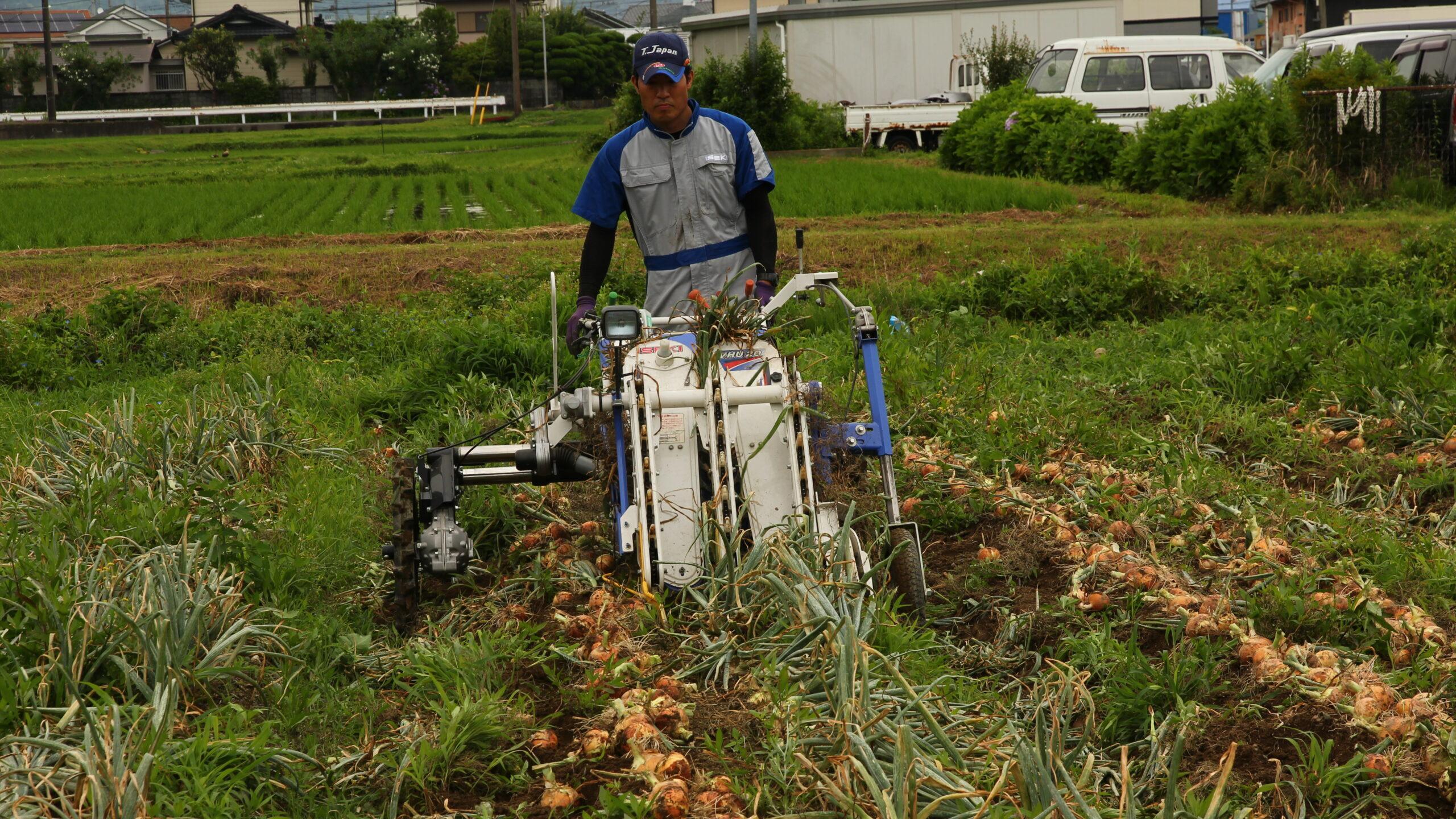 機械化一貫体系でたまねぎを栽培してみた